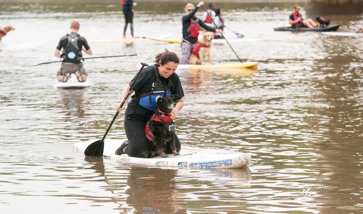 29 Awesome London Dog Events For You And Your Dog June 2018