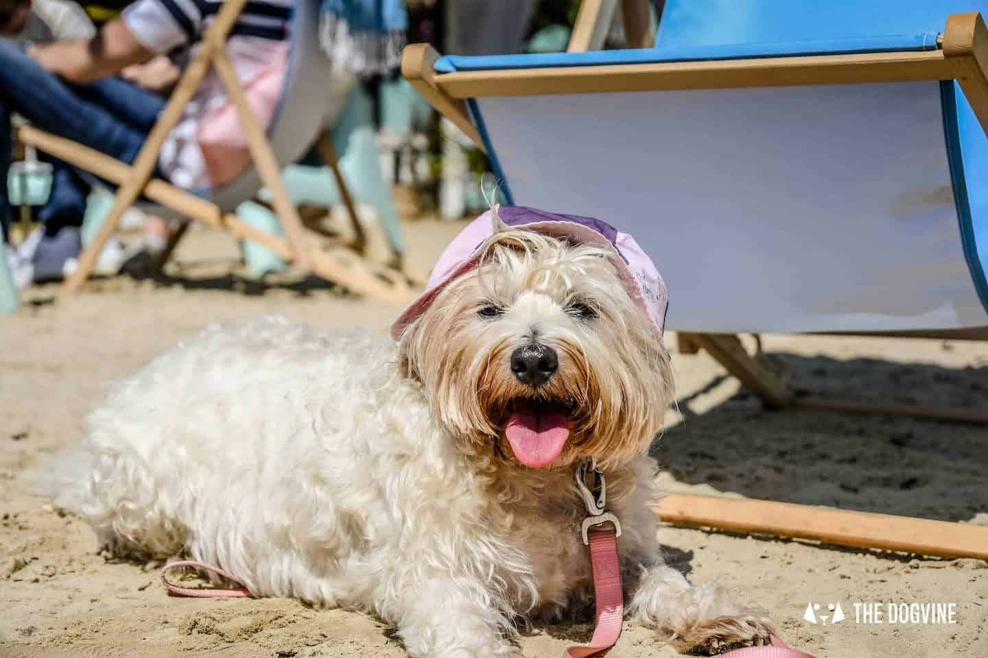 Dog-Friendly Neverland Beach Club - All You Need To Know 15