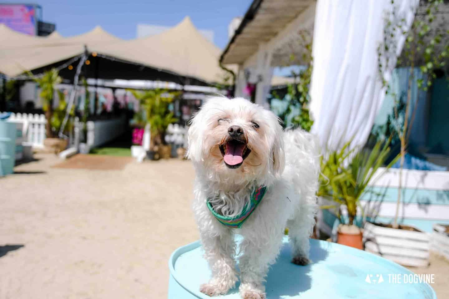 Dog-Friendly Neverland Beach Club - All You Need To Know 16