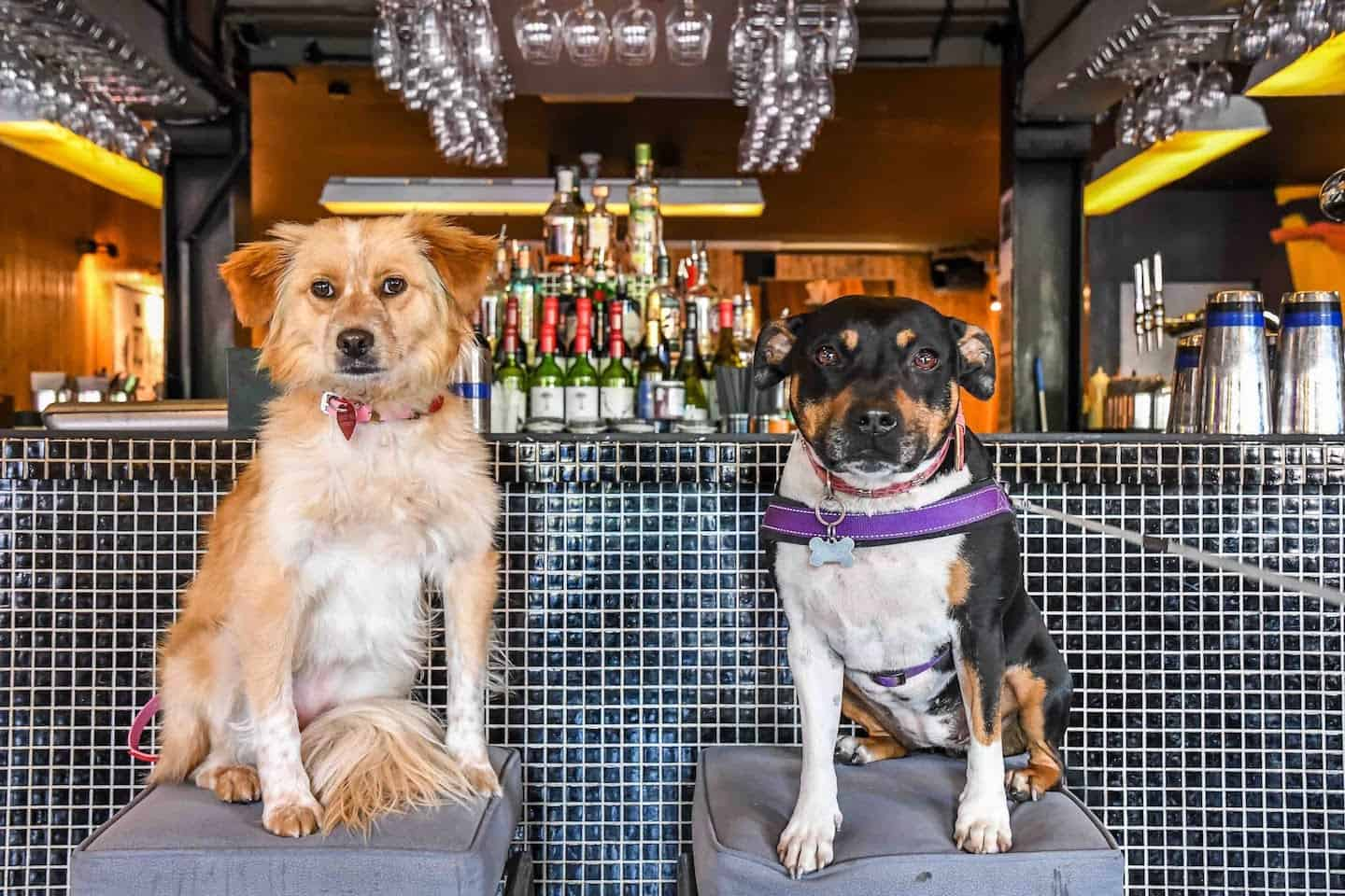 FI Your London Dog Events Round-up 26-28 May