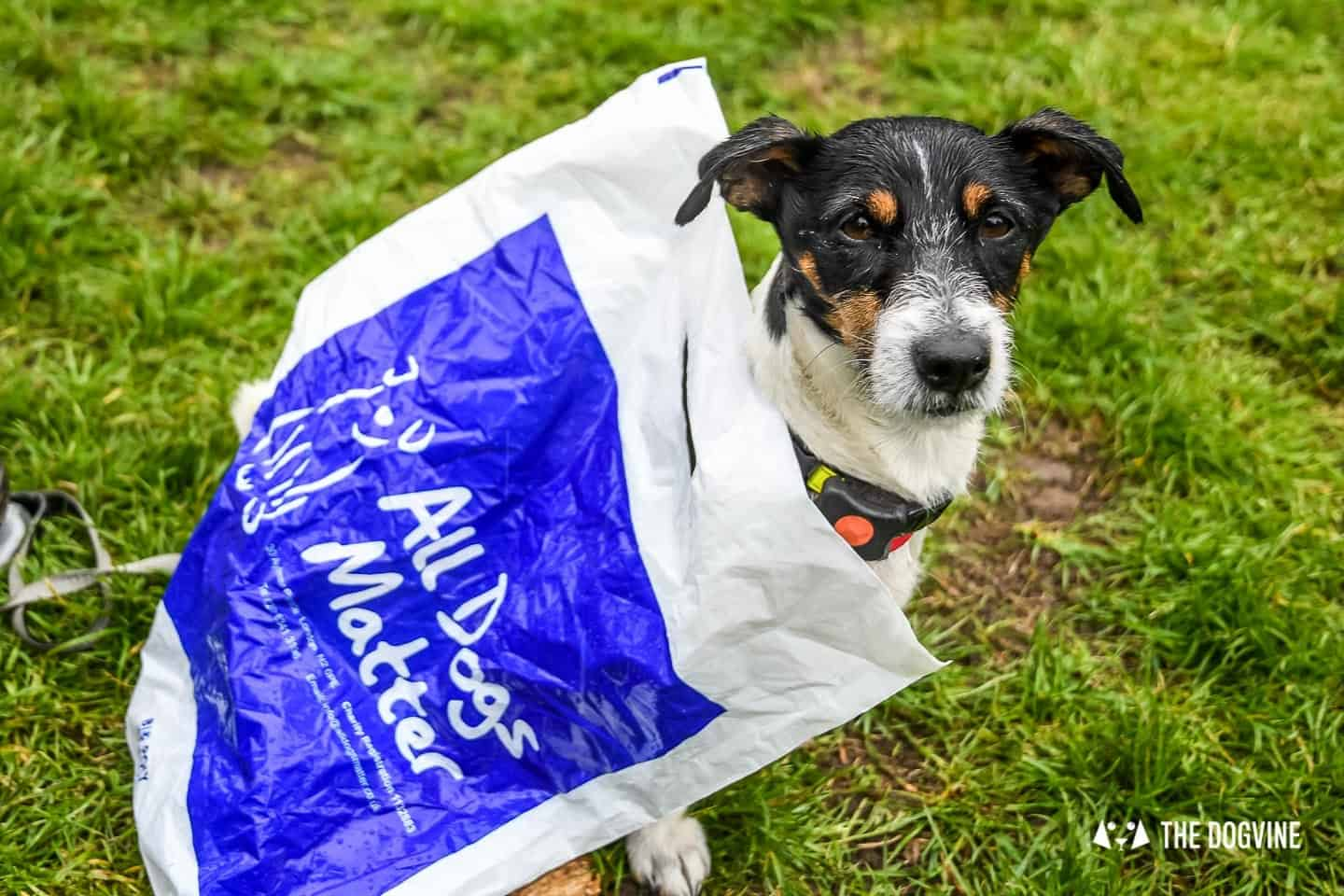 London Dogs At The Great Hampstead Bark Off 2018 109
