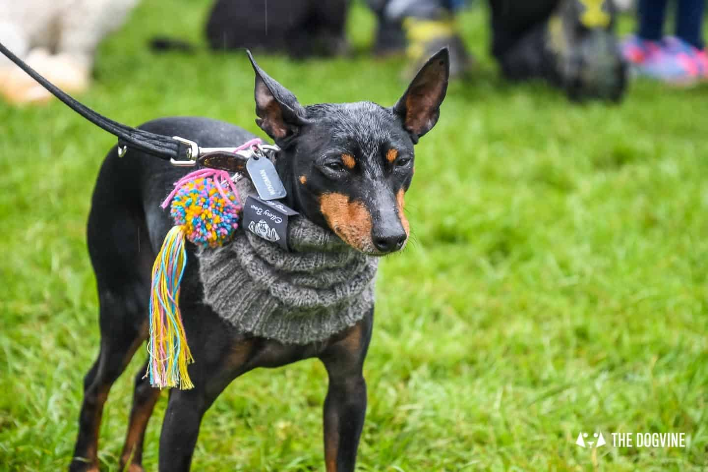 London Dogs At The Great Hampstead Bark Off 2018 126
