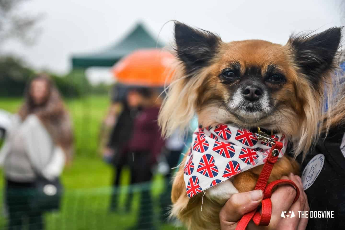 London Dogs At The Great Hampstead Bark Off 2018 150