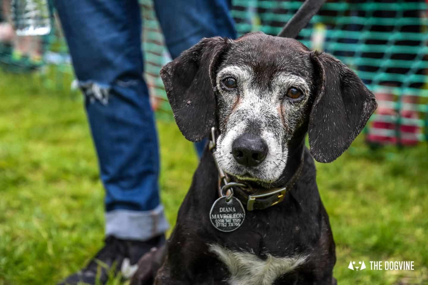 London Dogs At The Great Hampstead Bark Off 2018 80