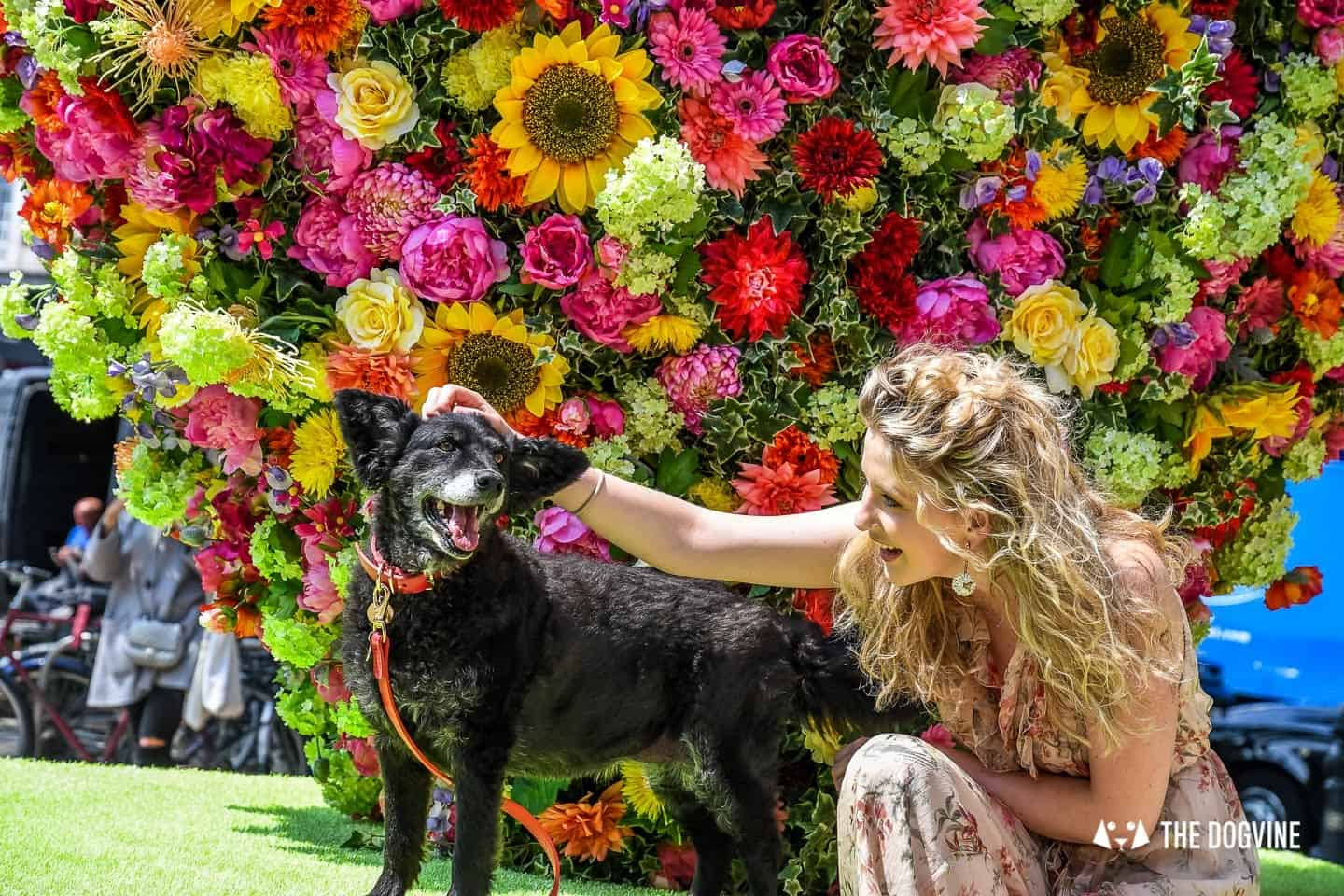 New Pet Lifestyle Brand Love My Human + Chelsea In Bloom 31