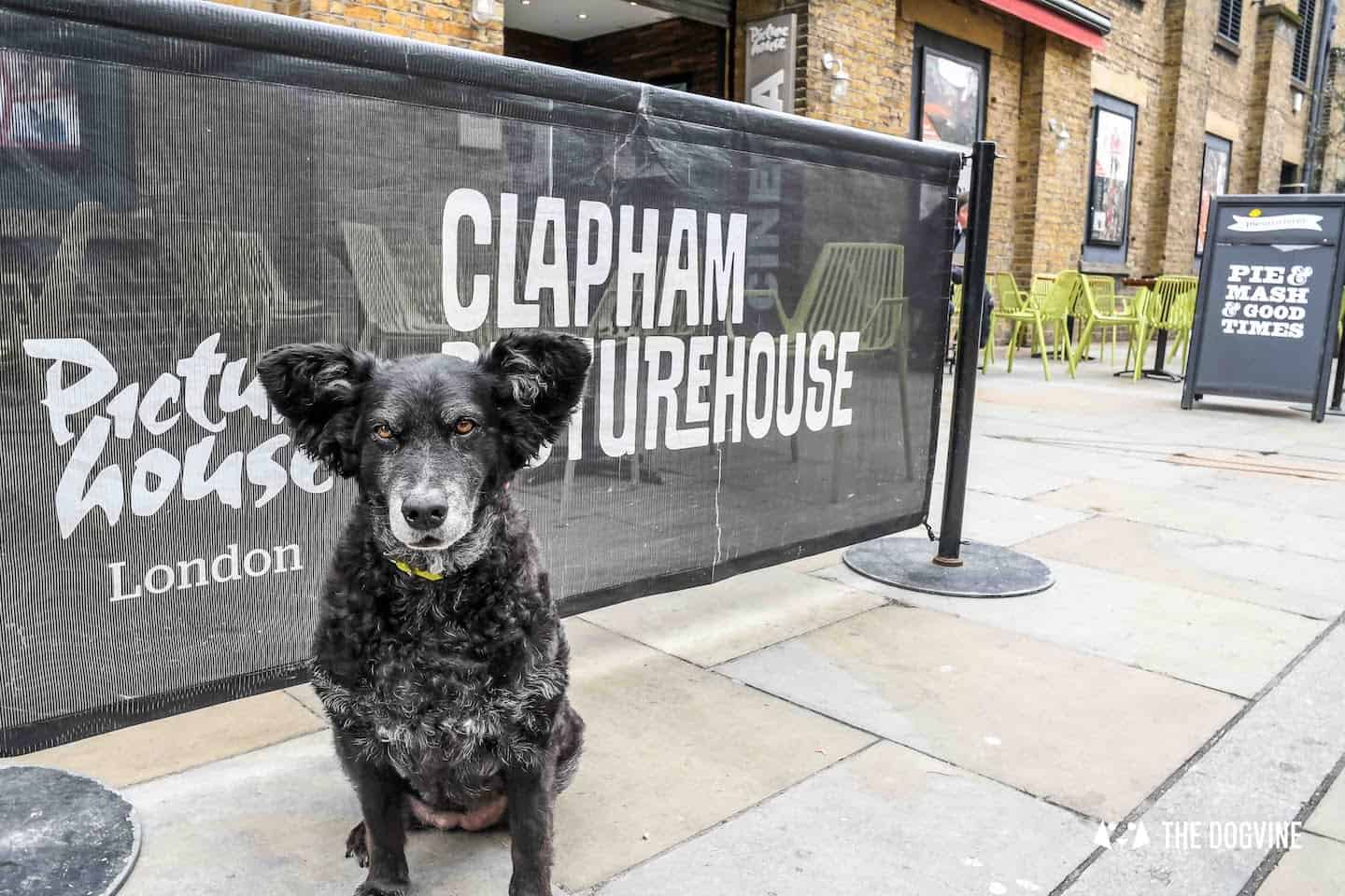 Your London Dog Events Round-up 26-28 May Clapham Picturehouse
