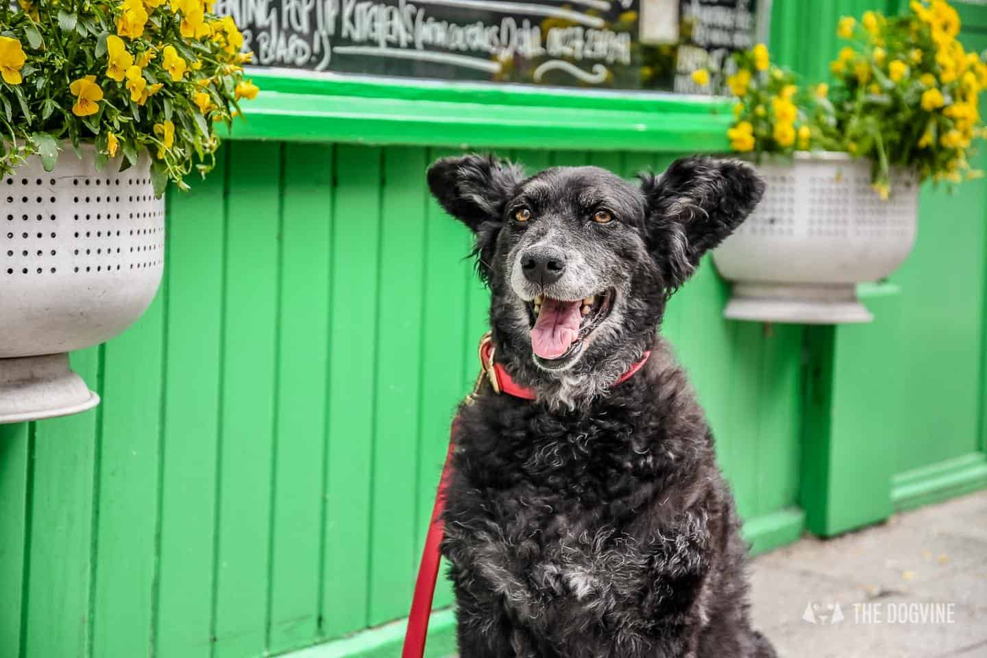 Dogs Day Out With Fetch & Follow On Tour In Dog-Friendly Whitstable 17