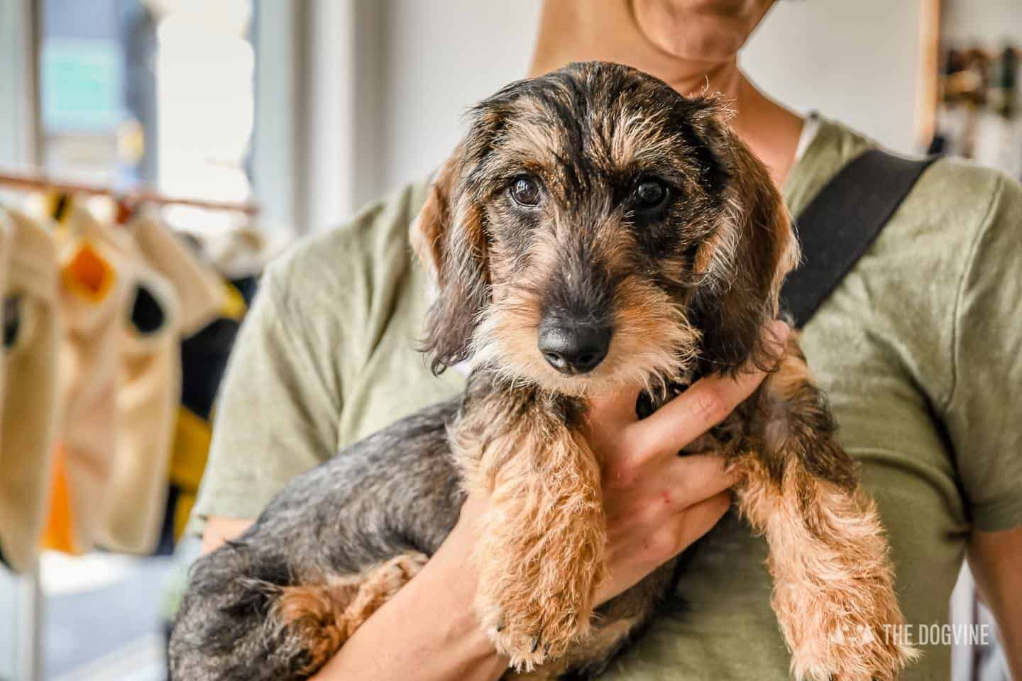 Dogs Day Out With Fetch & Follow On Tour In Dog-Friendly Whitstable 33