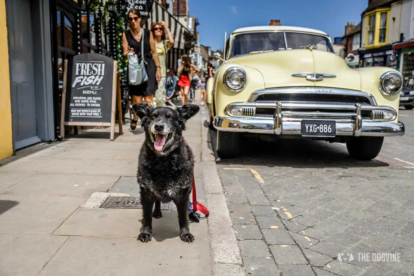 Dogs Day Out With Fetch & Follow On Tour In Dog-Friendly Whitstable 5