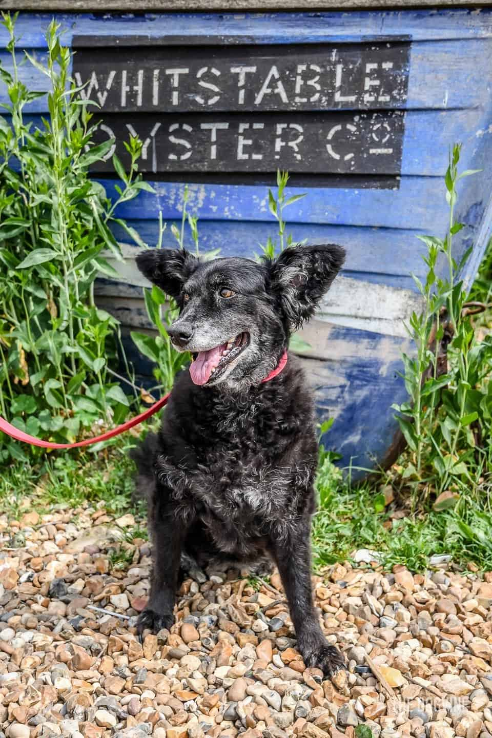 Dogs Day Out With Fetch & Follow On Tour In Dog-Friendly Whitstable 6