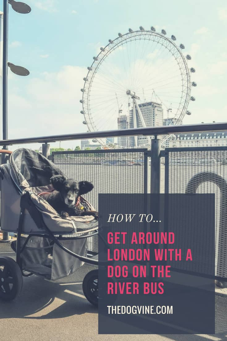 HOW TO GET AROUND LONDON WITH A DOG ON THE RIVER BUS