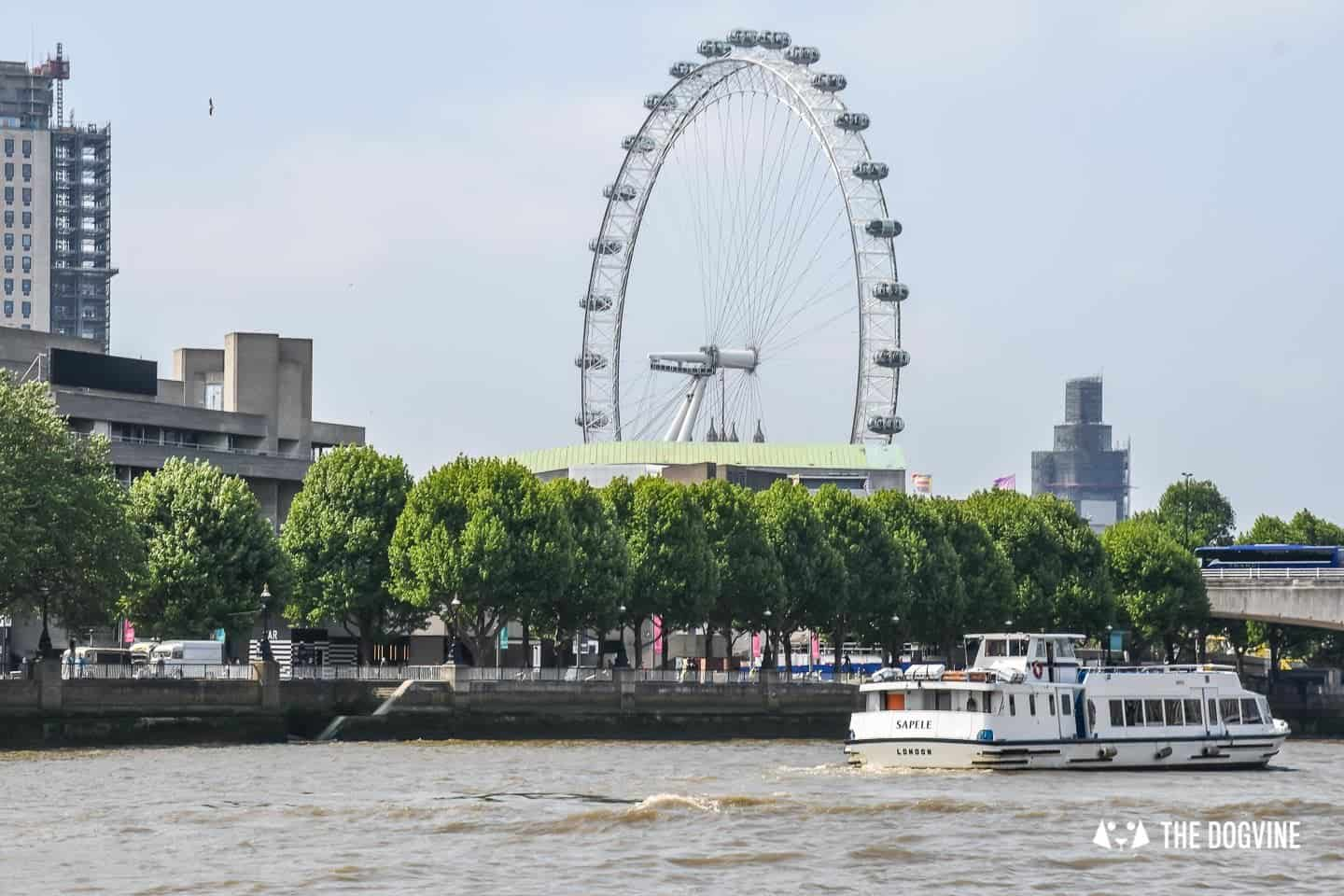 How To Get Around London With A Dog On The River Bus 1