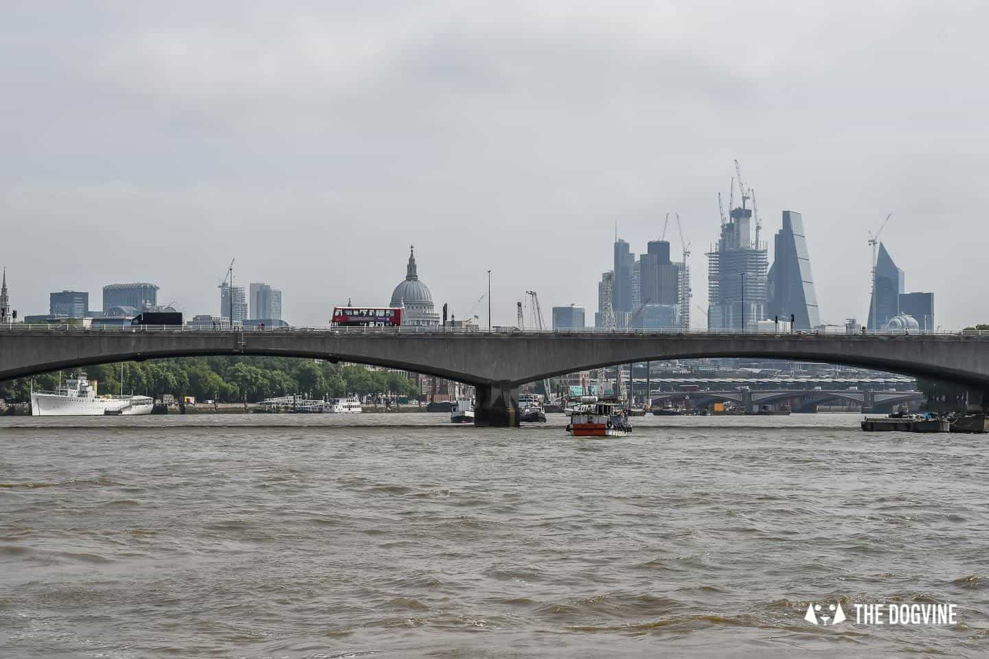 How To Get Around London With A Dog On The River Bus 2