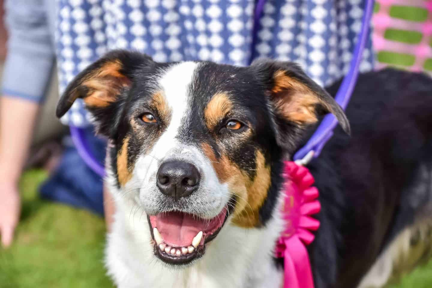 London Dog Shows And Events This Weekend   09-10 June