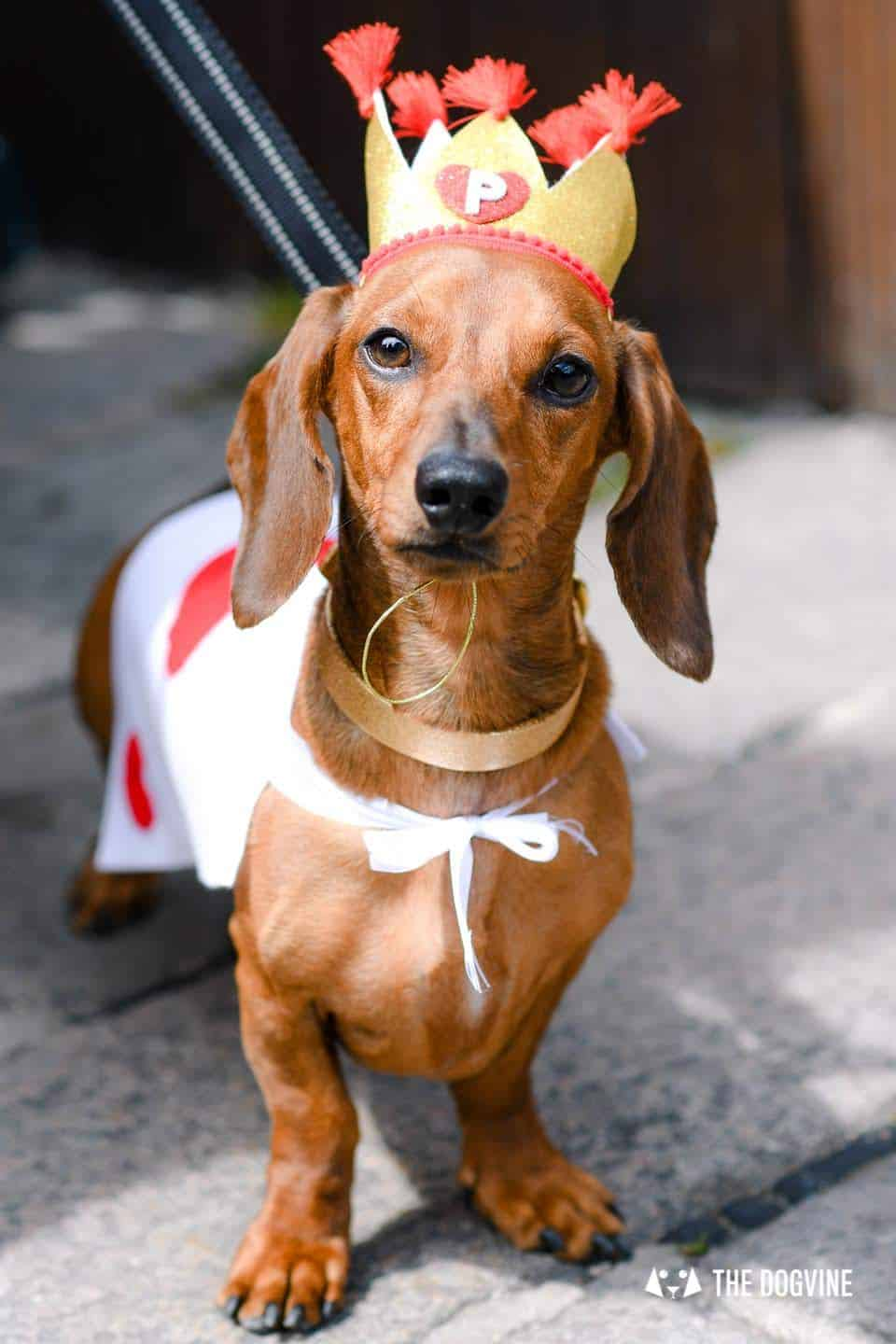 London's Best Dressed Dachshunds At Sausage Social London The Mad Hatters Tea Party 136