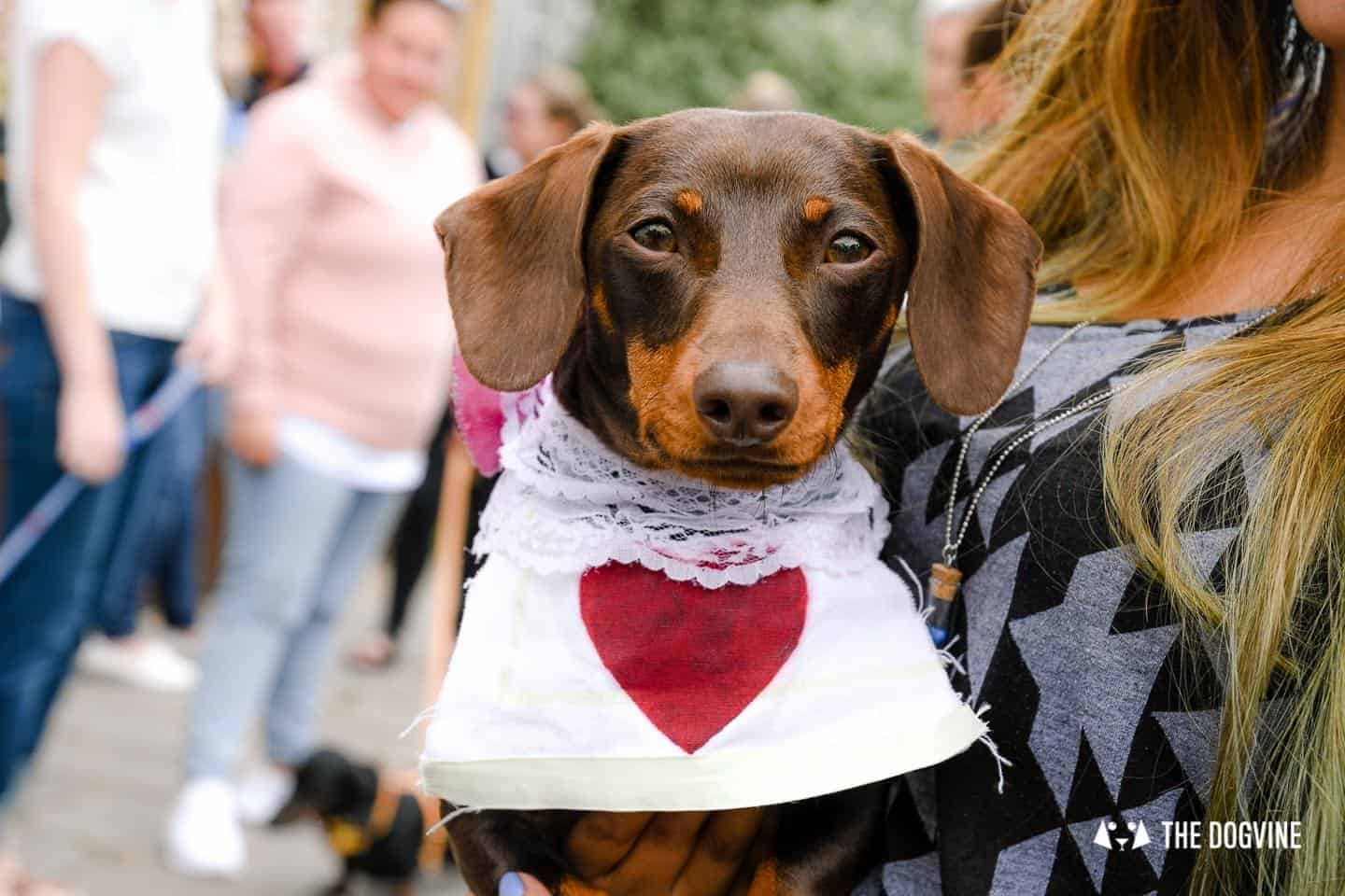 London's Best Dressed Dachshunds At Sausage Social London The Mad Hatters Tea Party 148