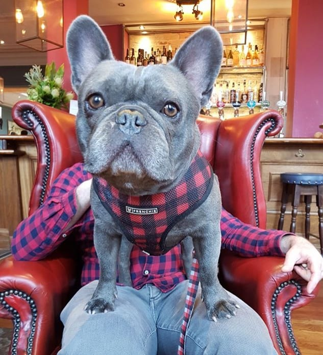 My Dog Friendly London By Herbie and Dave The Frenchies 10
