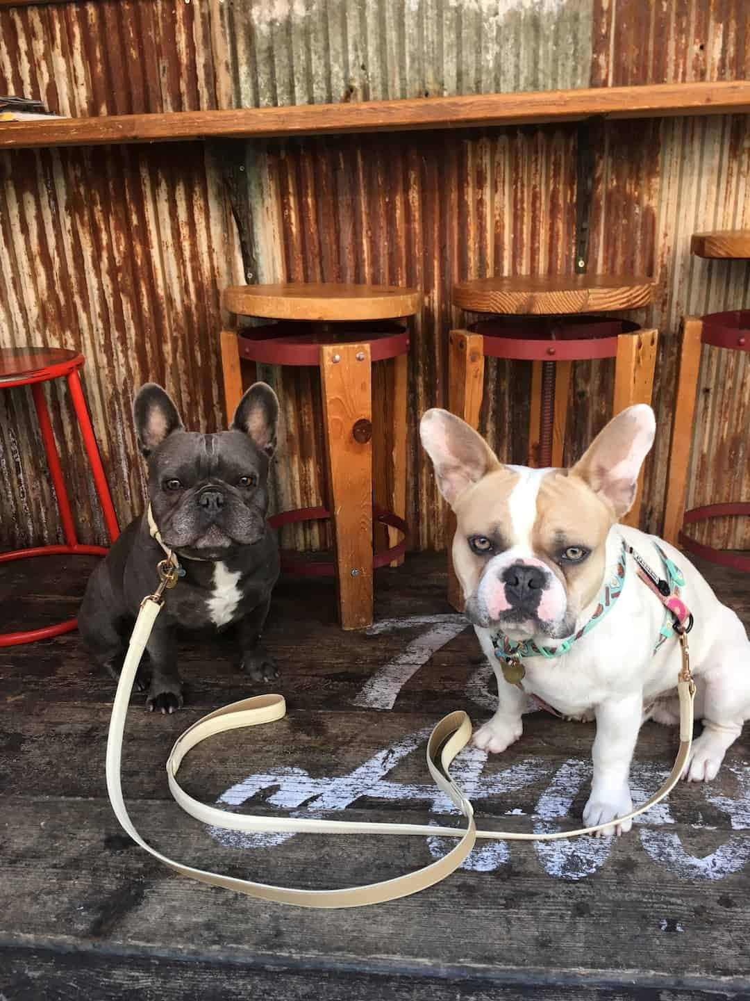 My Dog Friendly London By Herbie and Dave The Frenchies 9