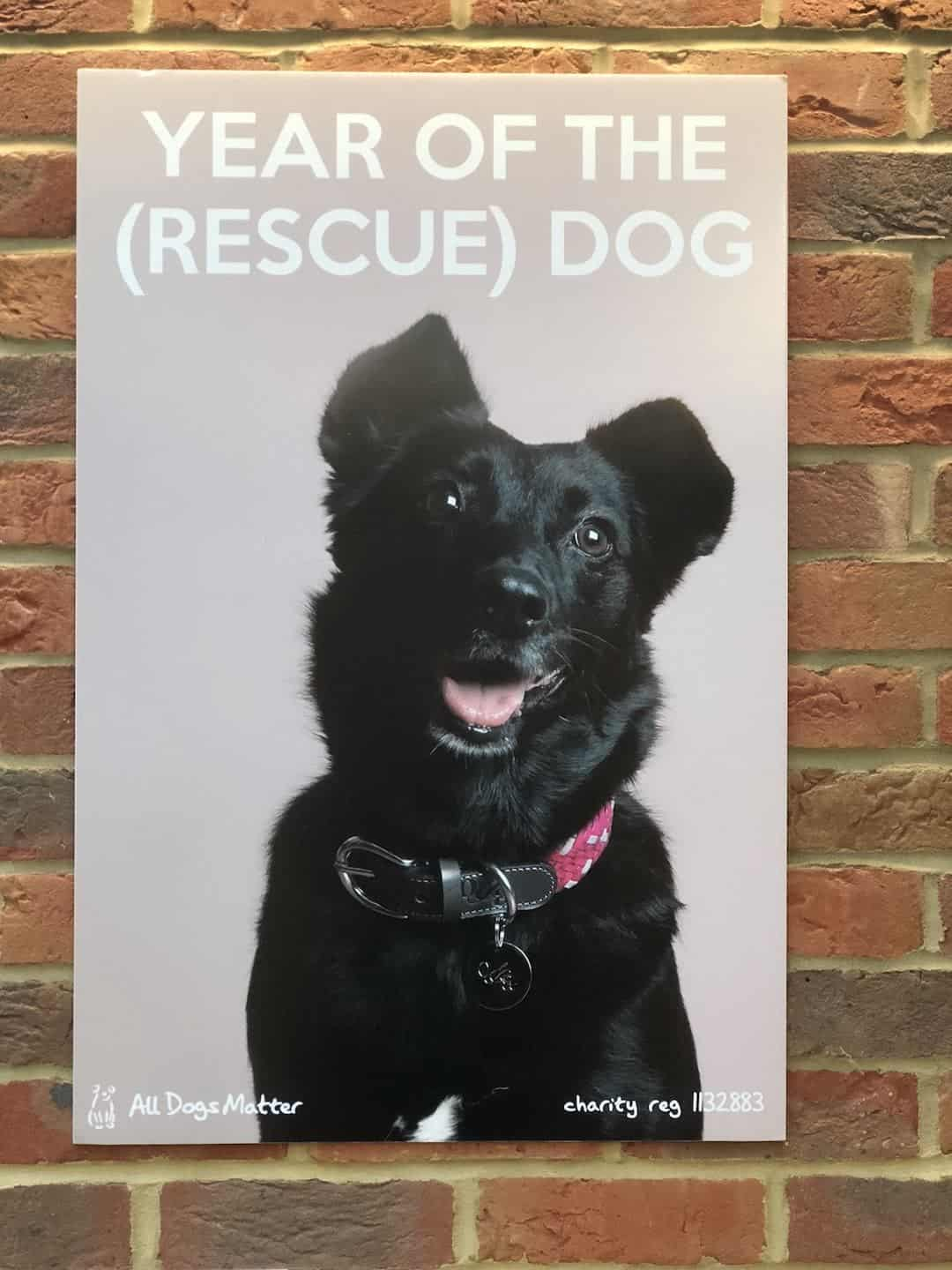 Year of The (Rescue) Dog Photo Exhibition 5