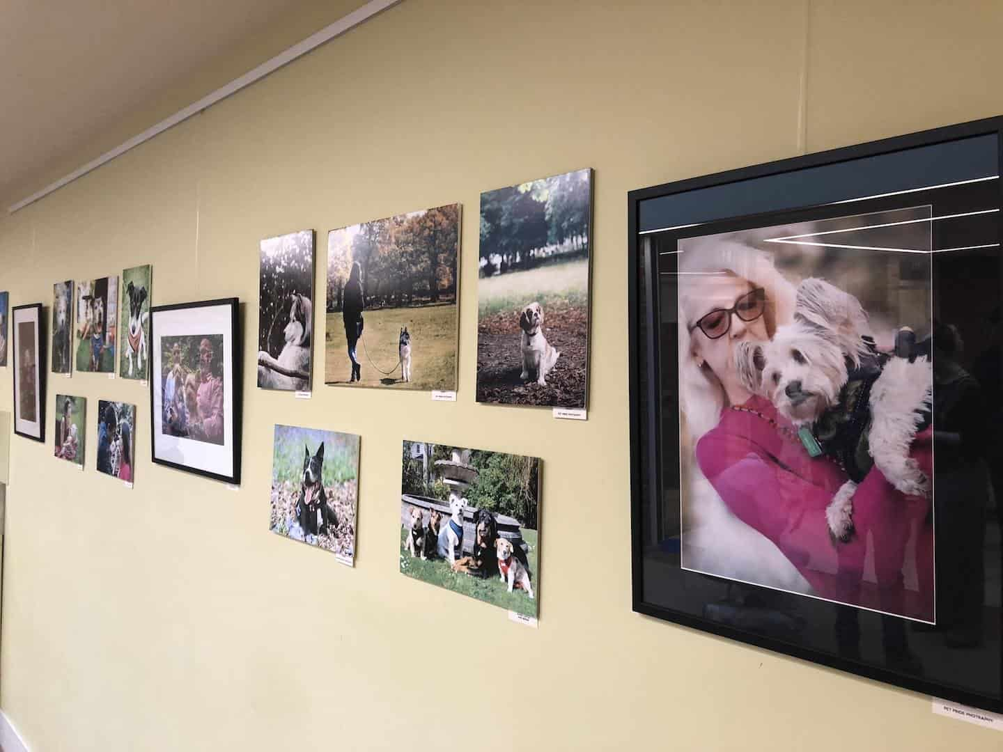 Year of The (Rescue) Dog Photo Exhibition 8