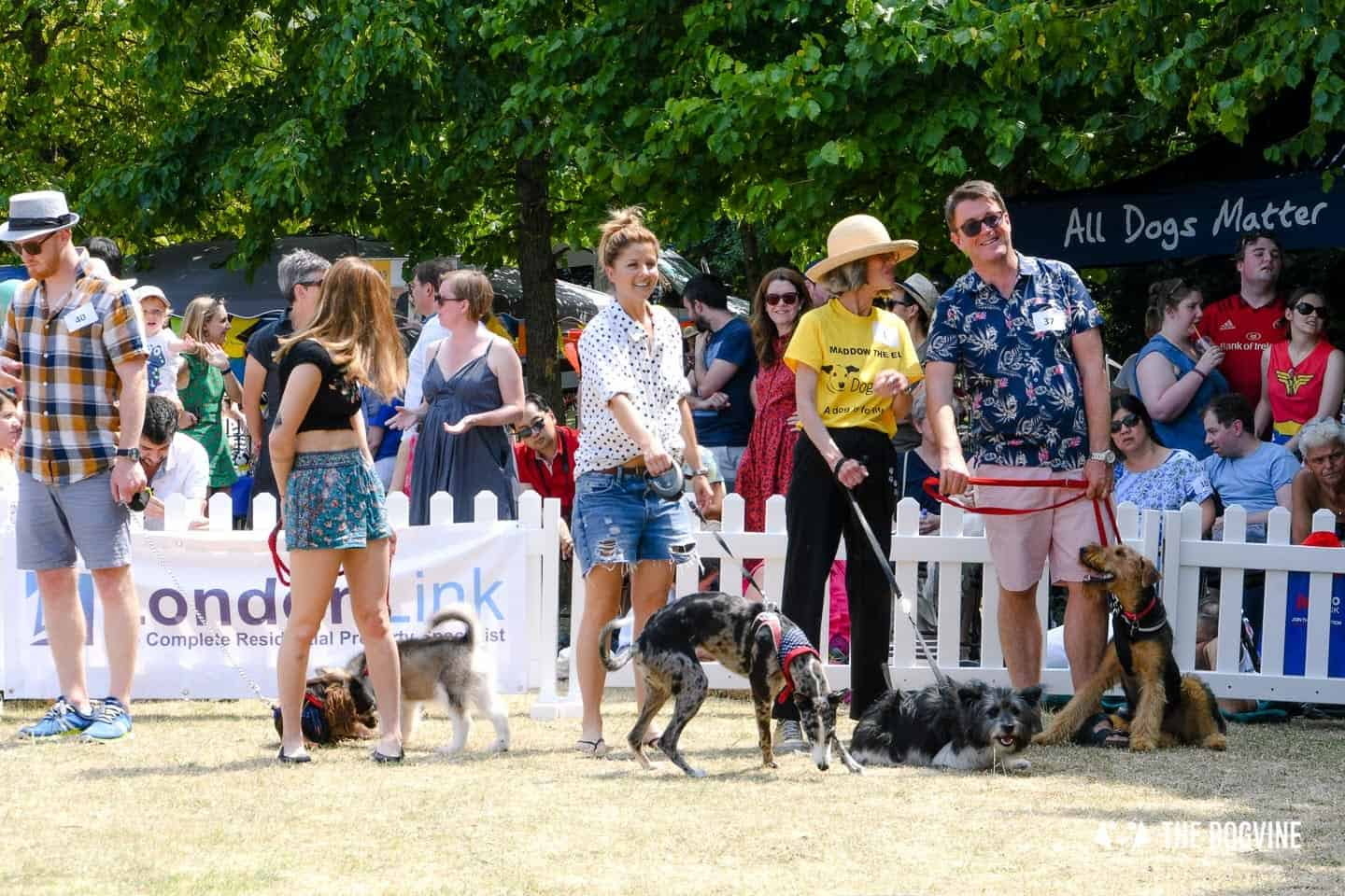 All Things Dog At The Canary Woof Dog Show 2018 11