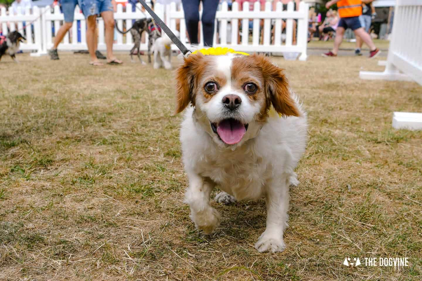 All Things Dog At The Canary Woof Dog Show 2018 32
