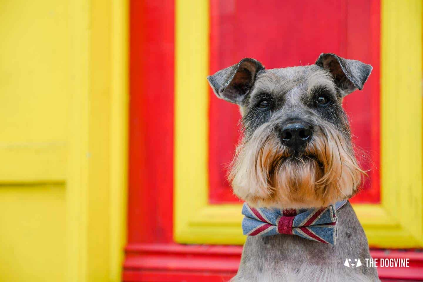 My Dog Friendly London By Pepper Chung the Schnauzer - Dog Friendly Notting Hill 15