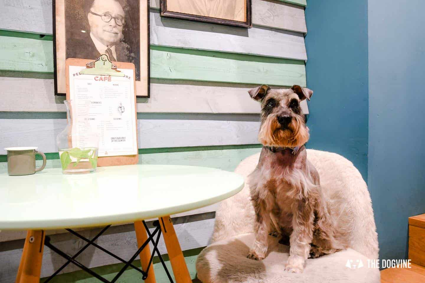 My Dog Friendly London By Pepper Chung the Schnauzer - Dog Friendly Notting Hill 3