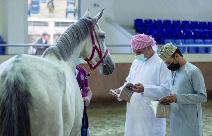 Show Horse and Racehorse auctions kick off new season