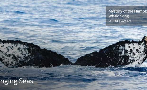 Mystery of the Humpback Whale Song