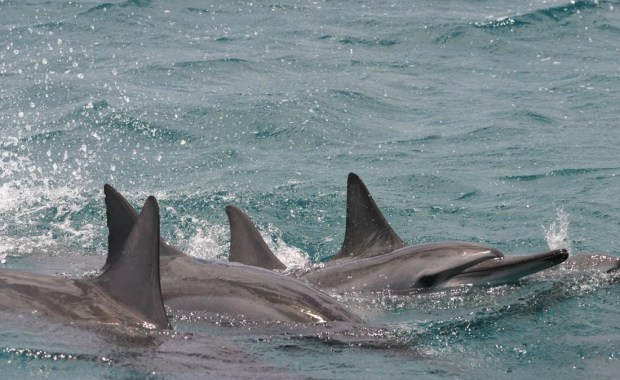 Identifying Important Habitat for Spinner Dolphins of East Hawaii