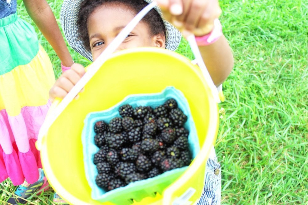 5 healthy and tasty snack ideas that kids will love