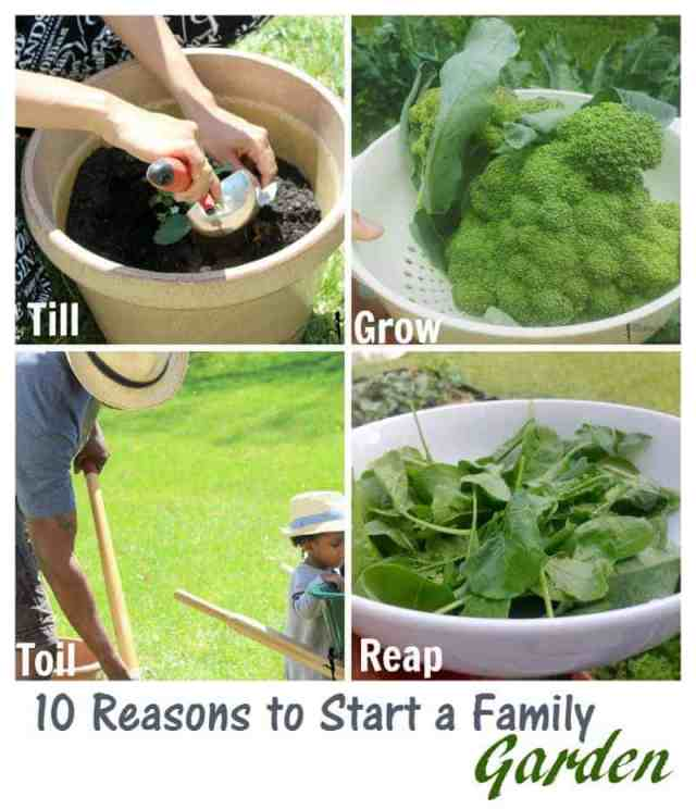reasons to start a family garden