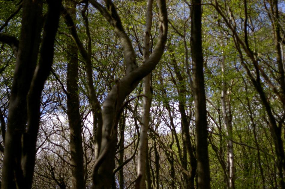 09-trees