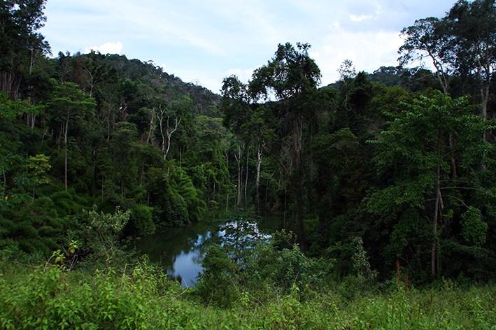 Wald bei Thakhek, Zentrallaos