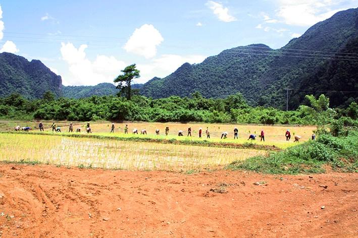 Reisbauern auf dem Feld in LAos