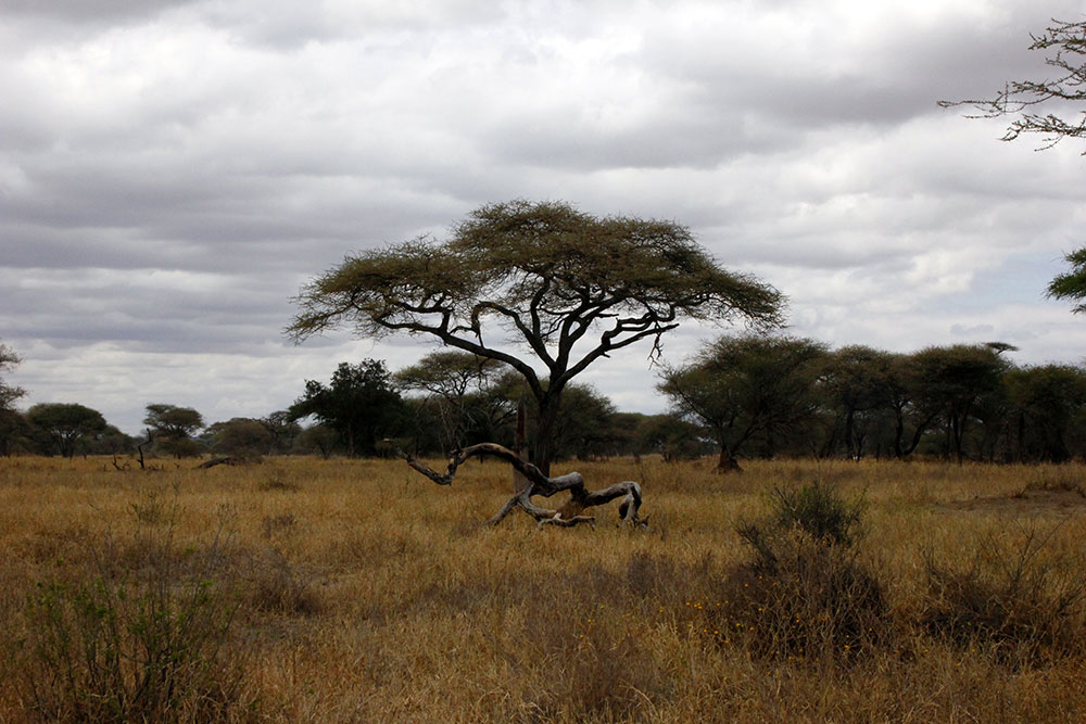 Tarangiri Nationalpark