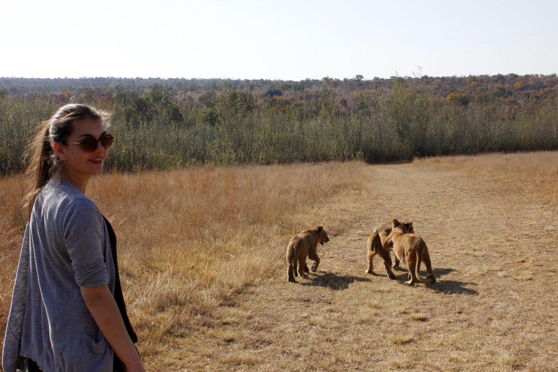 Dorie läuft mit drei jungen Löwen