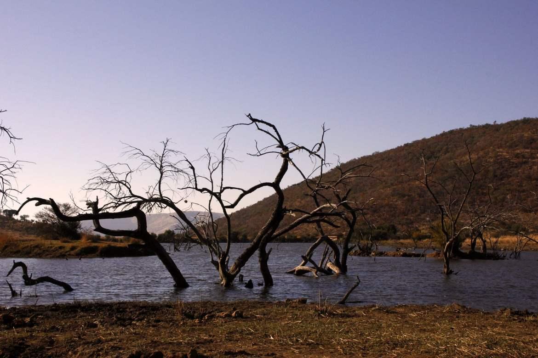 See mit abgestorbenen Bäumen in Pilanesberg