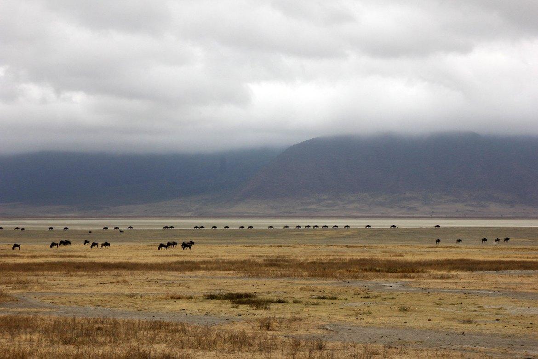 Gnus am Horizont des Ngorongoro Kraters