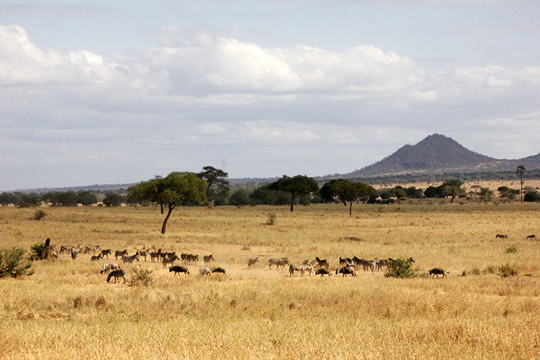 Landschaft im Tarangire Nationalpark