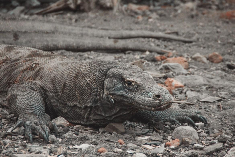 Komodo Waran in Indonesien, Komodo Nationalpark
