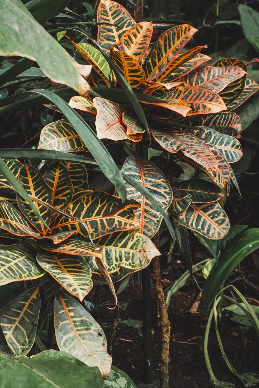 Blumengärten Hirschstetten als Ausflugstipp