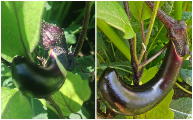 Into the Garden: Vegetables
