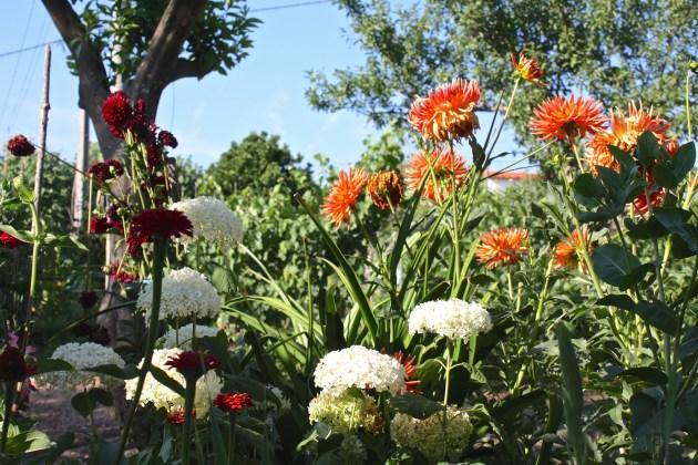 A Portuguese Garden