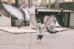 "Staple x PUMA Suede ""Pigeon"""