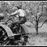 What My Orchard Teaches Me about Investing