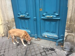 Charlie the Wonder dog inspecting a chasse-roue in the ninth arrondissement.