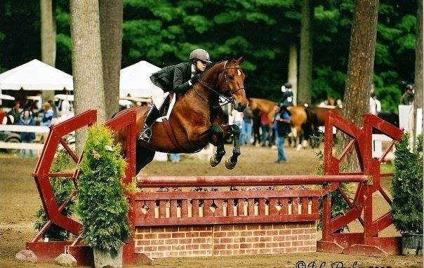 A Decade of Change: My Re-Entry into the Horse Show World