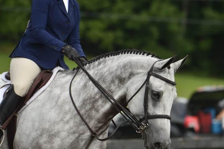 Safely Expressing Yourself in the Hunter Ring